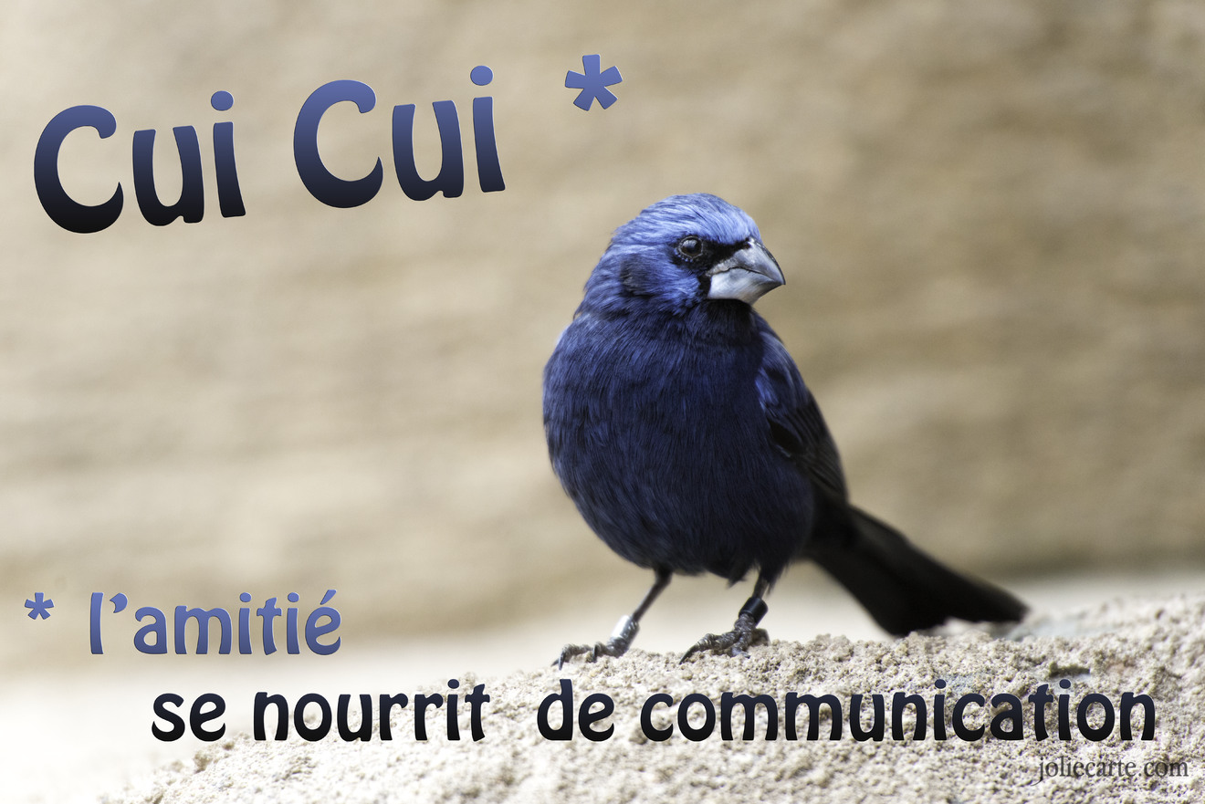 Amitie communication