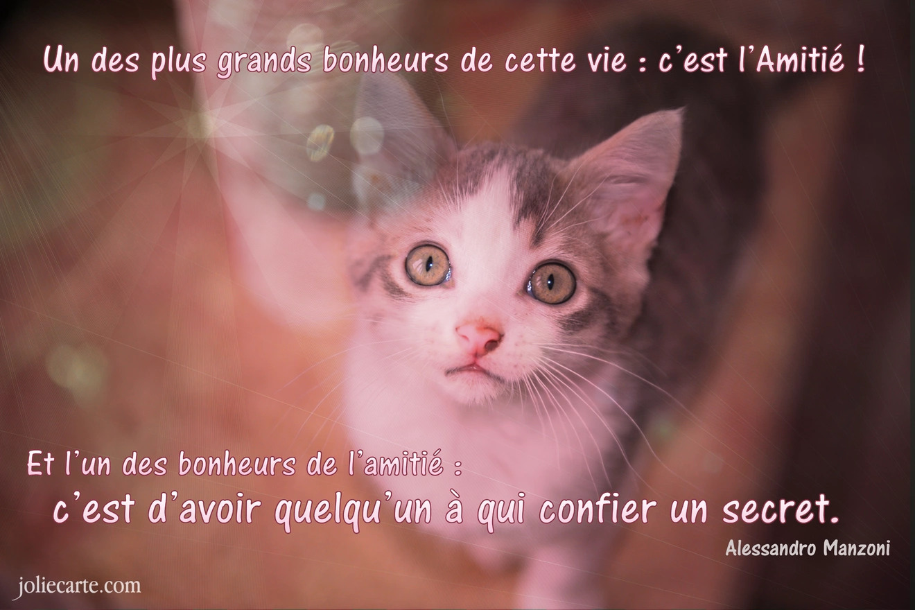 Amitie proverbe chat
