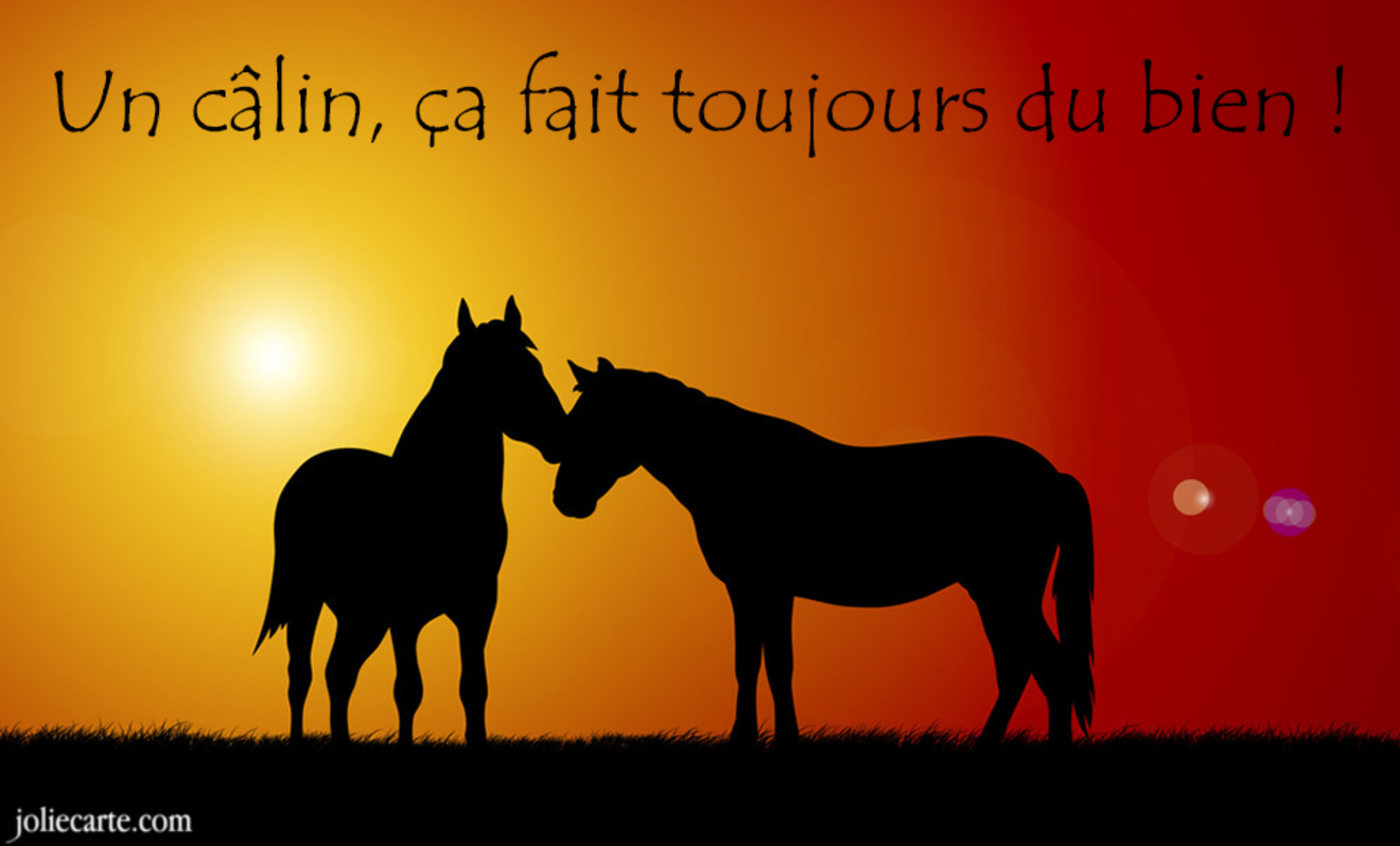 Bisous calins cheval