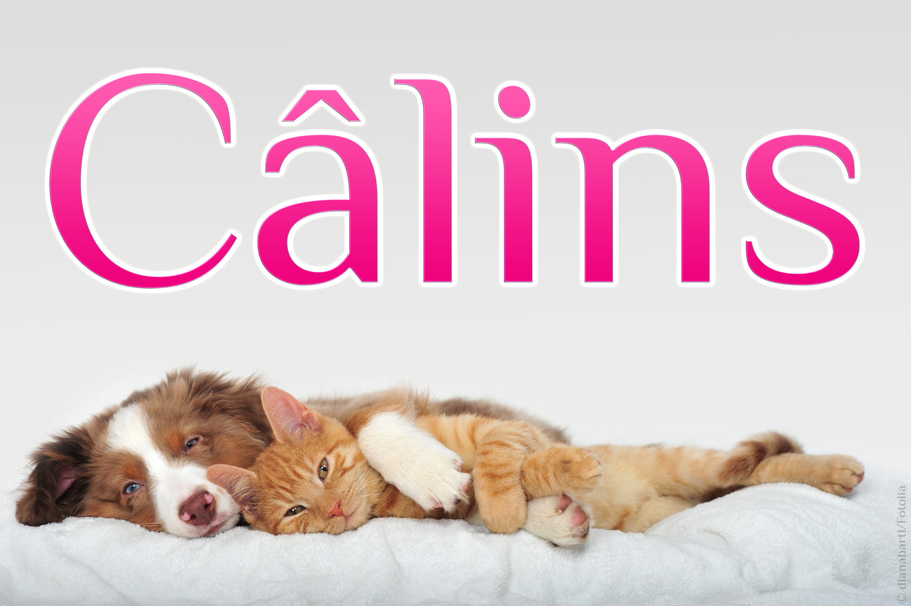 Calin chien chat