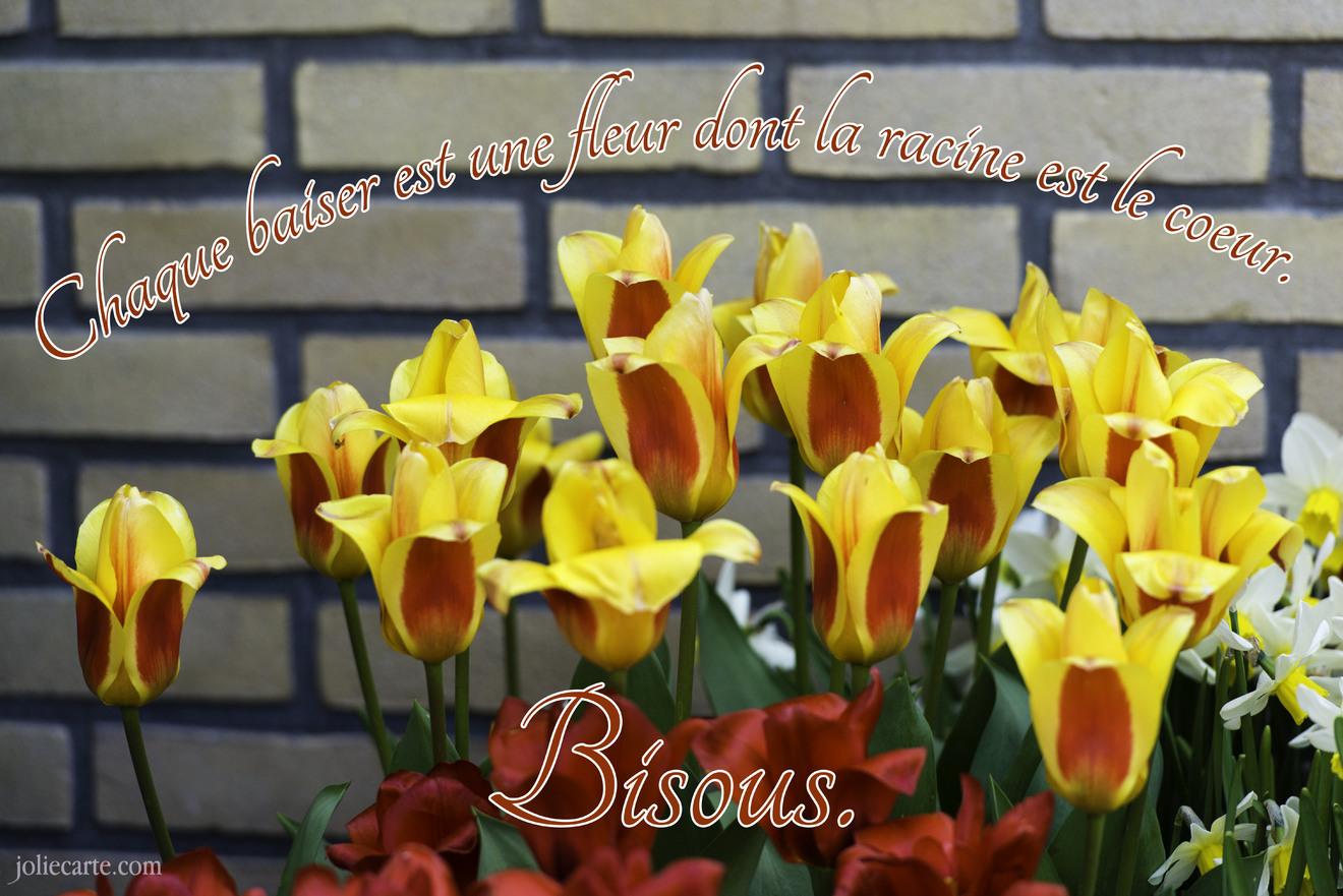Citation amour bisous