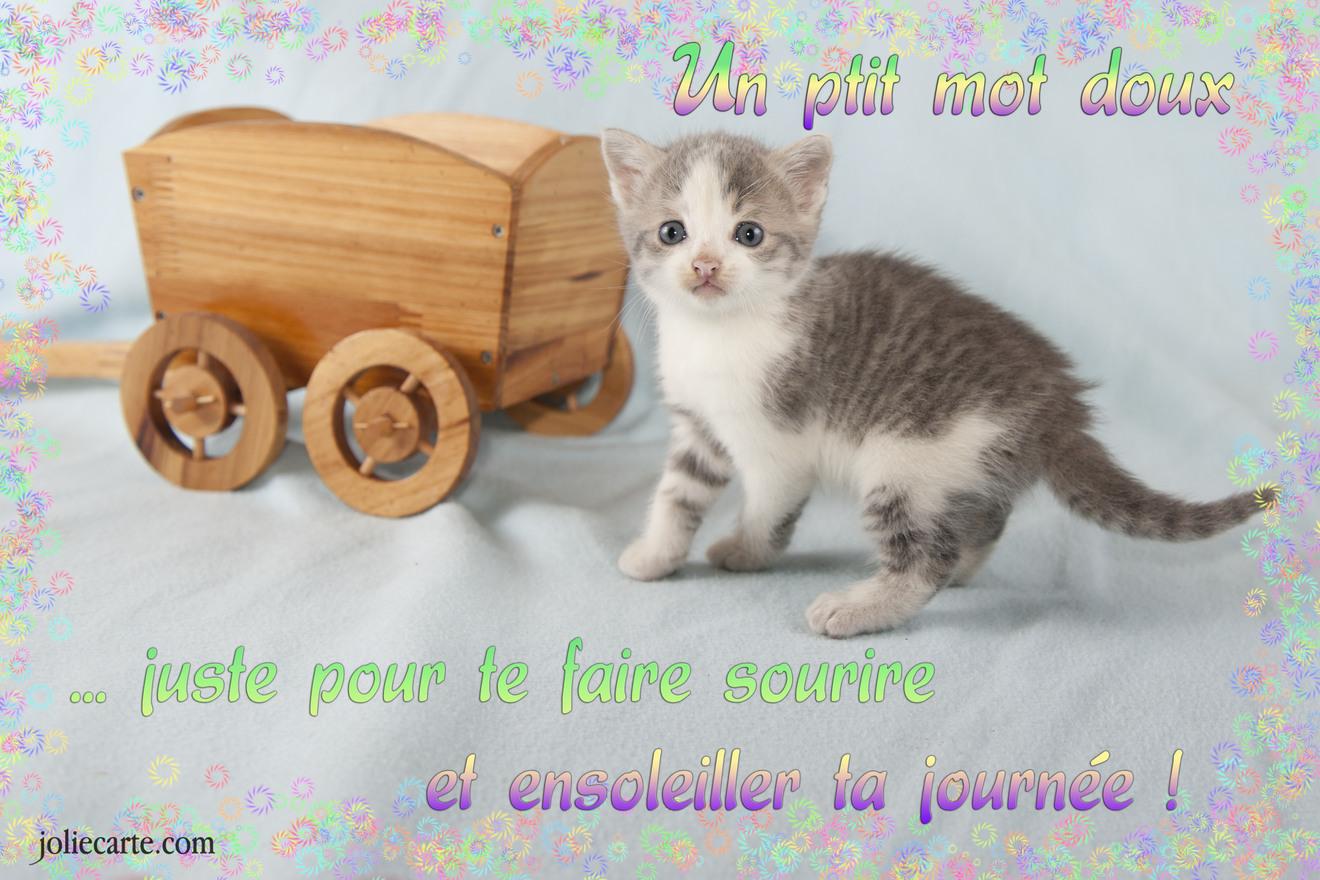 Petit mot doux chat