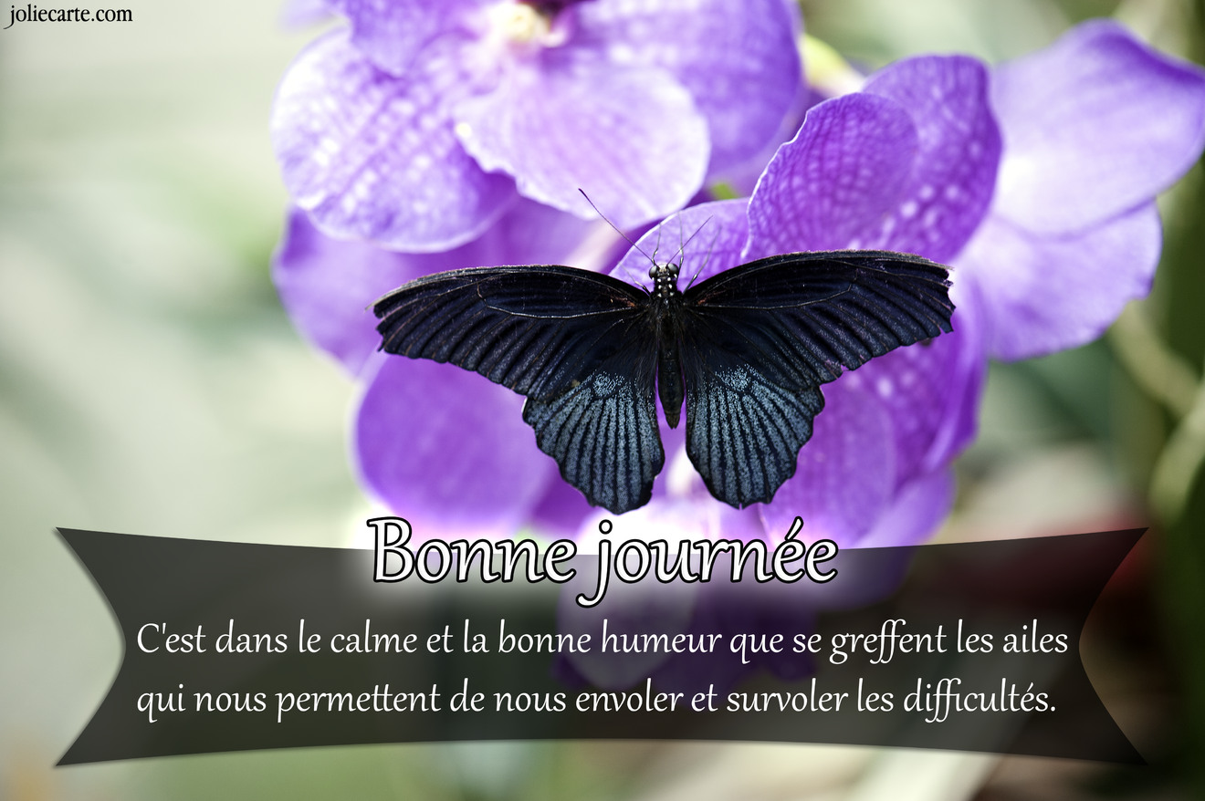 Papillon orchidee