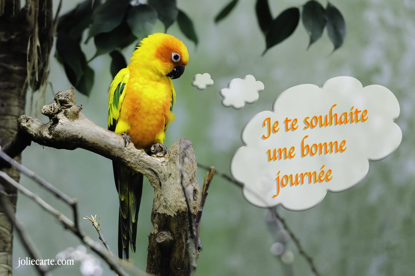 http://fichiers.joliecarte.com/images/cartes/fr/cartes-virtuelles/bonne_journee/souhait-bonne-journee.jpg