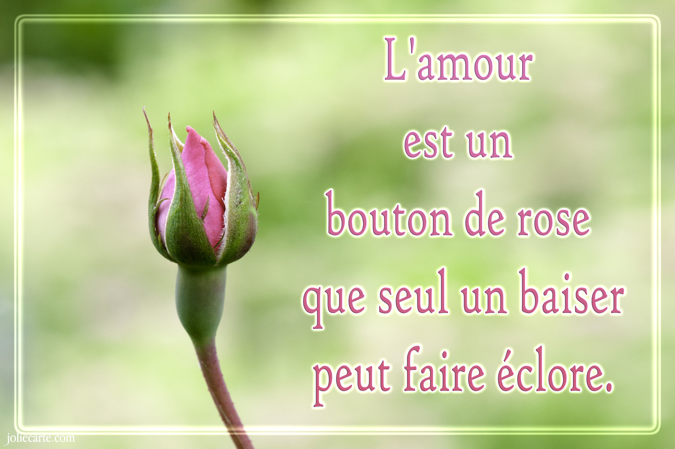 Amour bouton