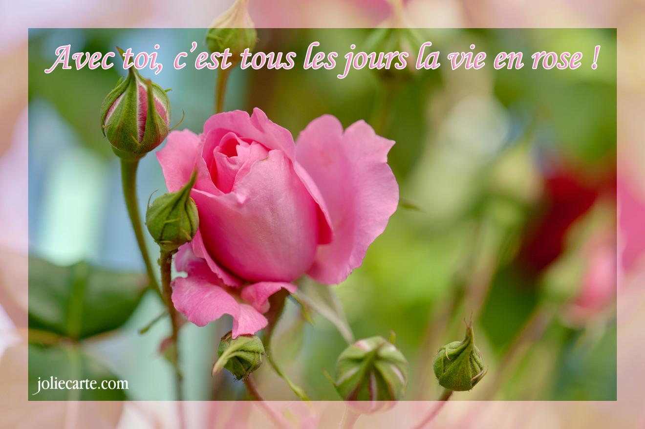 Compliment vie en rose