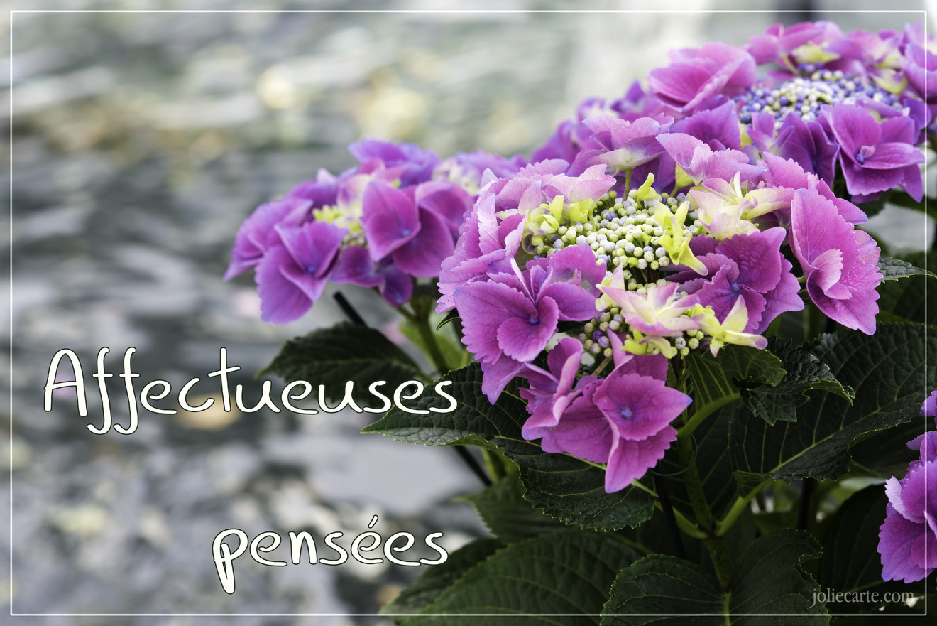 Affectueuses pensees condoleances