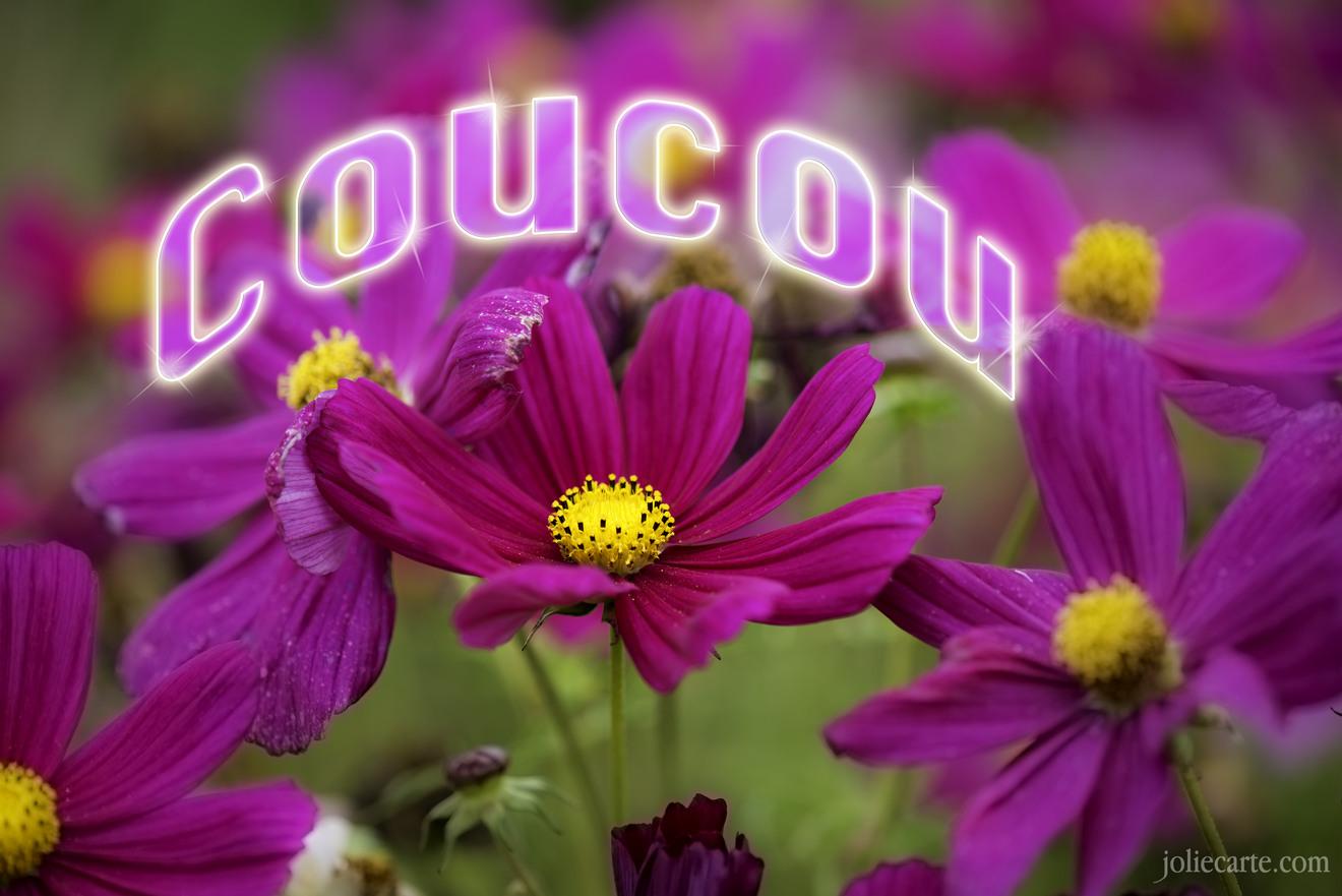 Coucou fleur