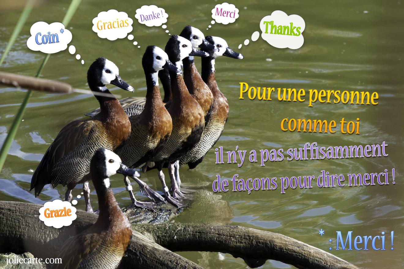 Pour une personne comme toi il n'y a pas suffisamment de façons pour dire merci ! Merci, thanks, gracias, danke, grazie, coin !