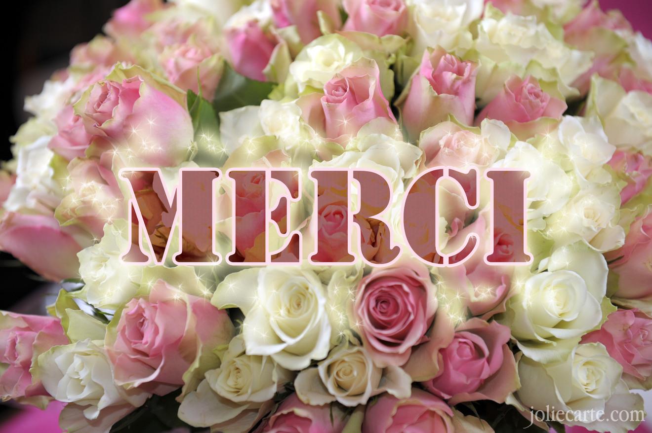 """Résultat de recherche d'images pour """"rose merci"""""""
