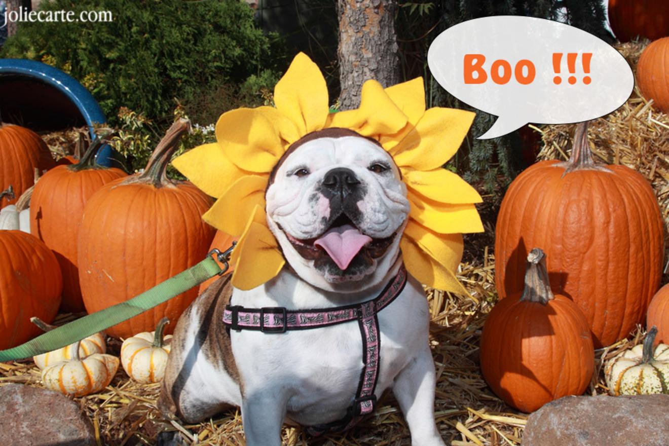 Carte chien mignon halloween