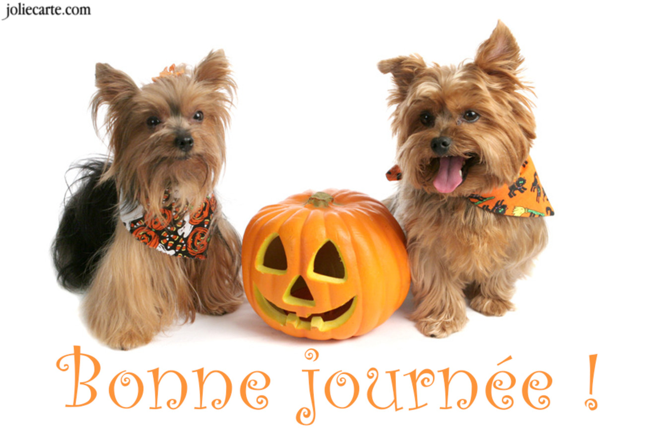 Carte halloween bonne journee