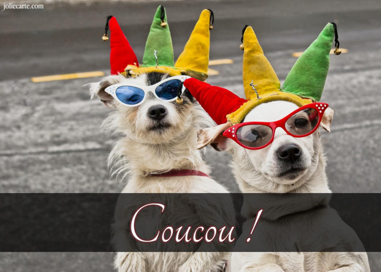 Chien chapeau carnaval
