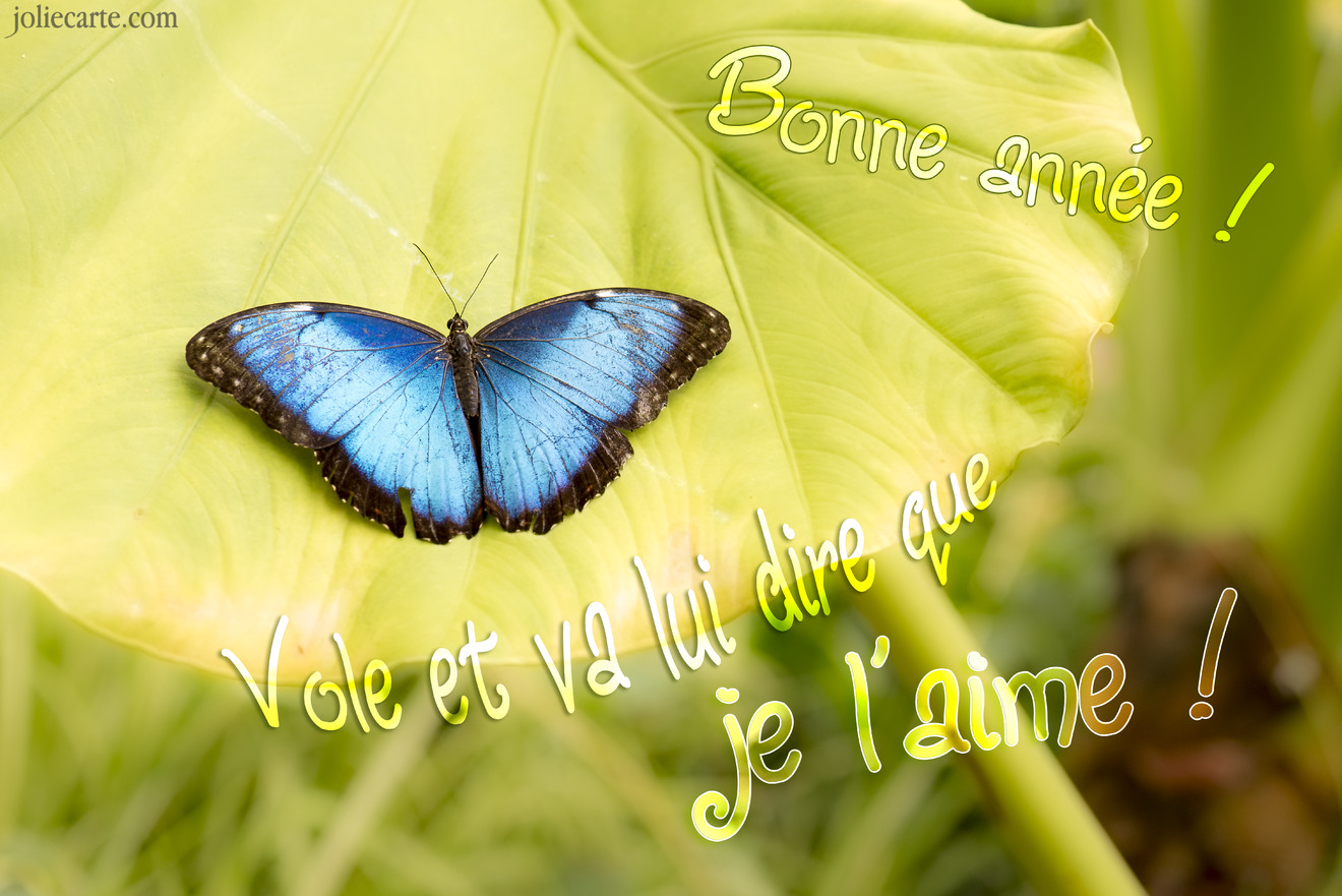 Amour voeux