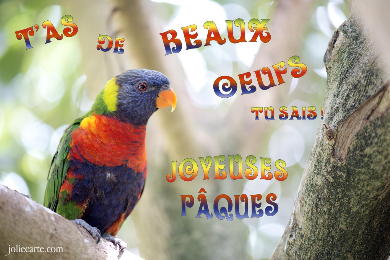 Cartes virtuelles paques oiseau joliecarte - Joyeuses paques images gratuites ...