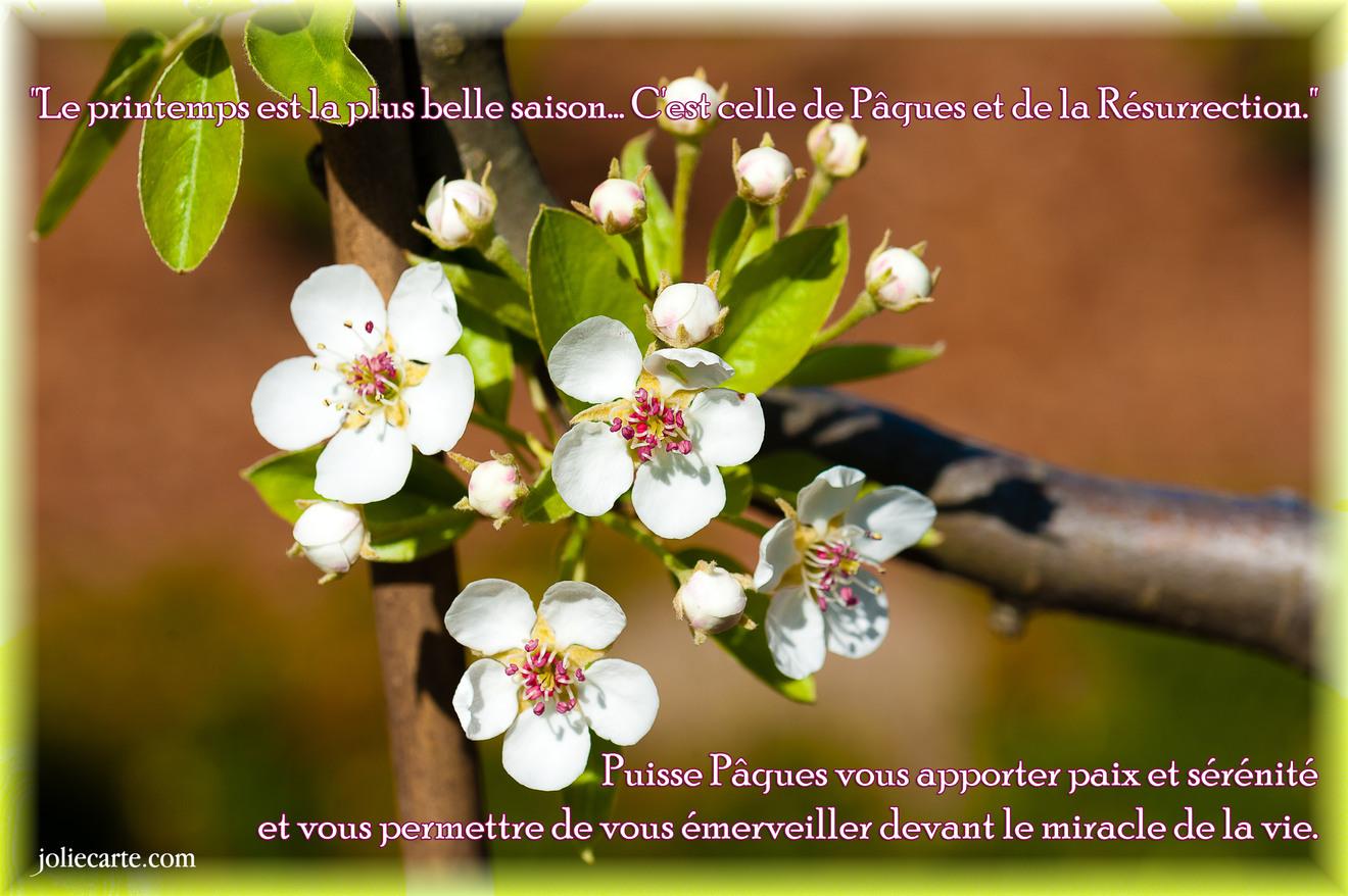 Cartes virtuelles printemps paques religieux joliecarte for Par la fenetre ouverte bonjour le jour