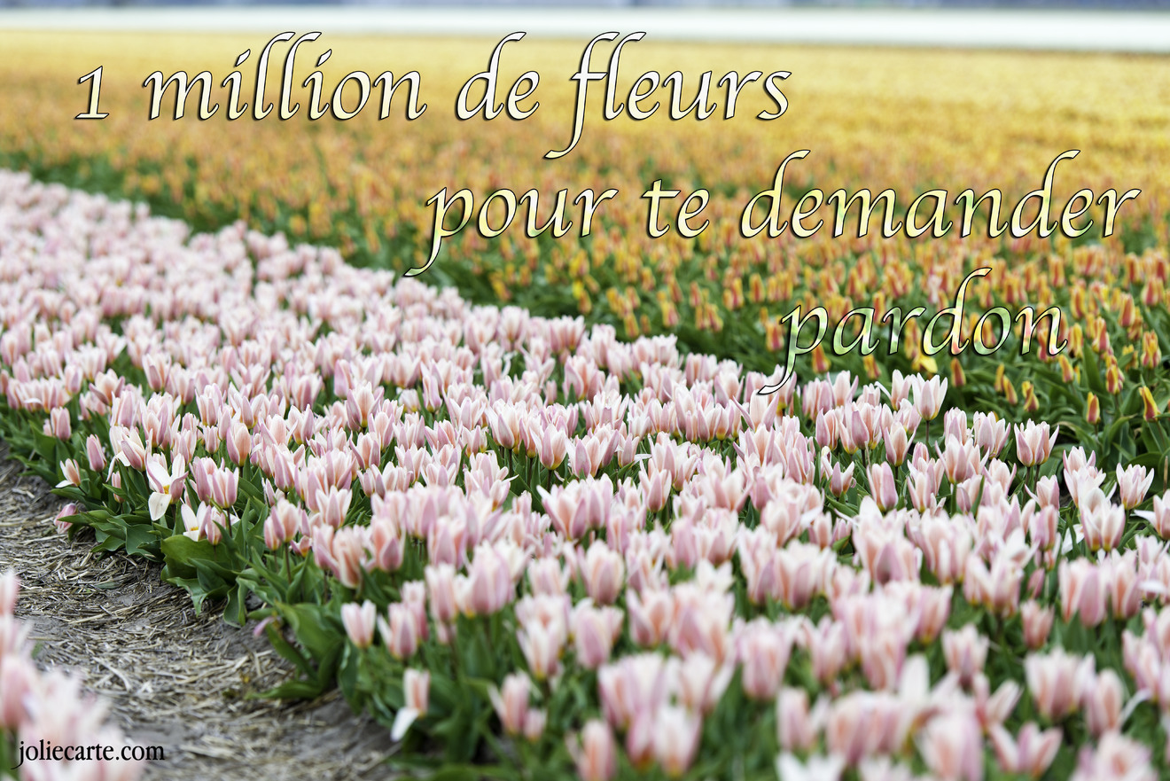 Fleurs pardon
