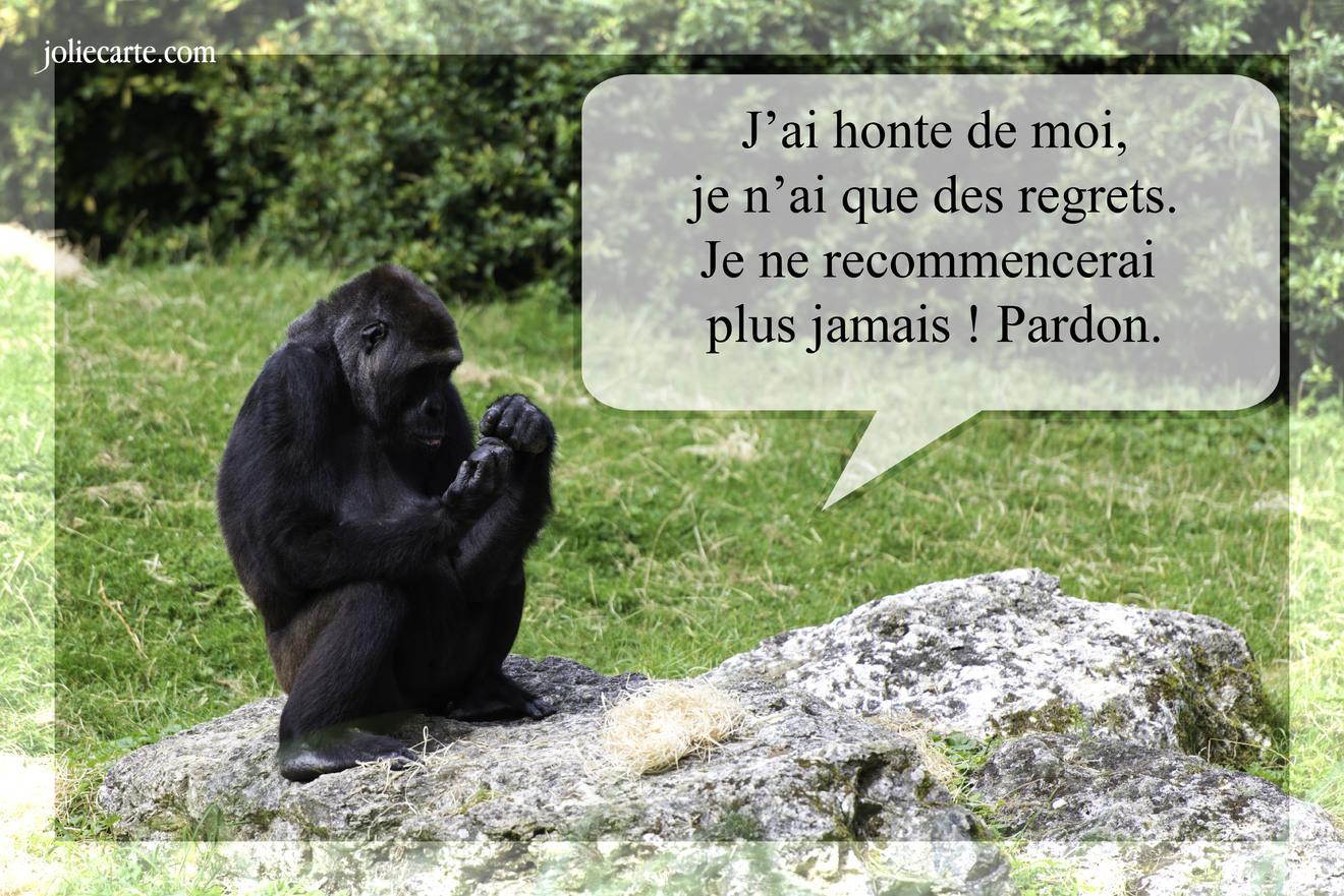 Pardon regrets