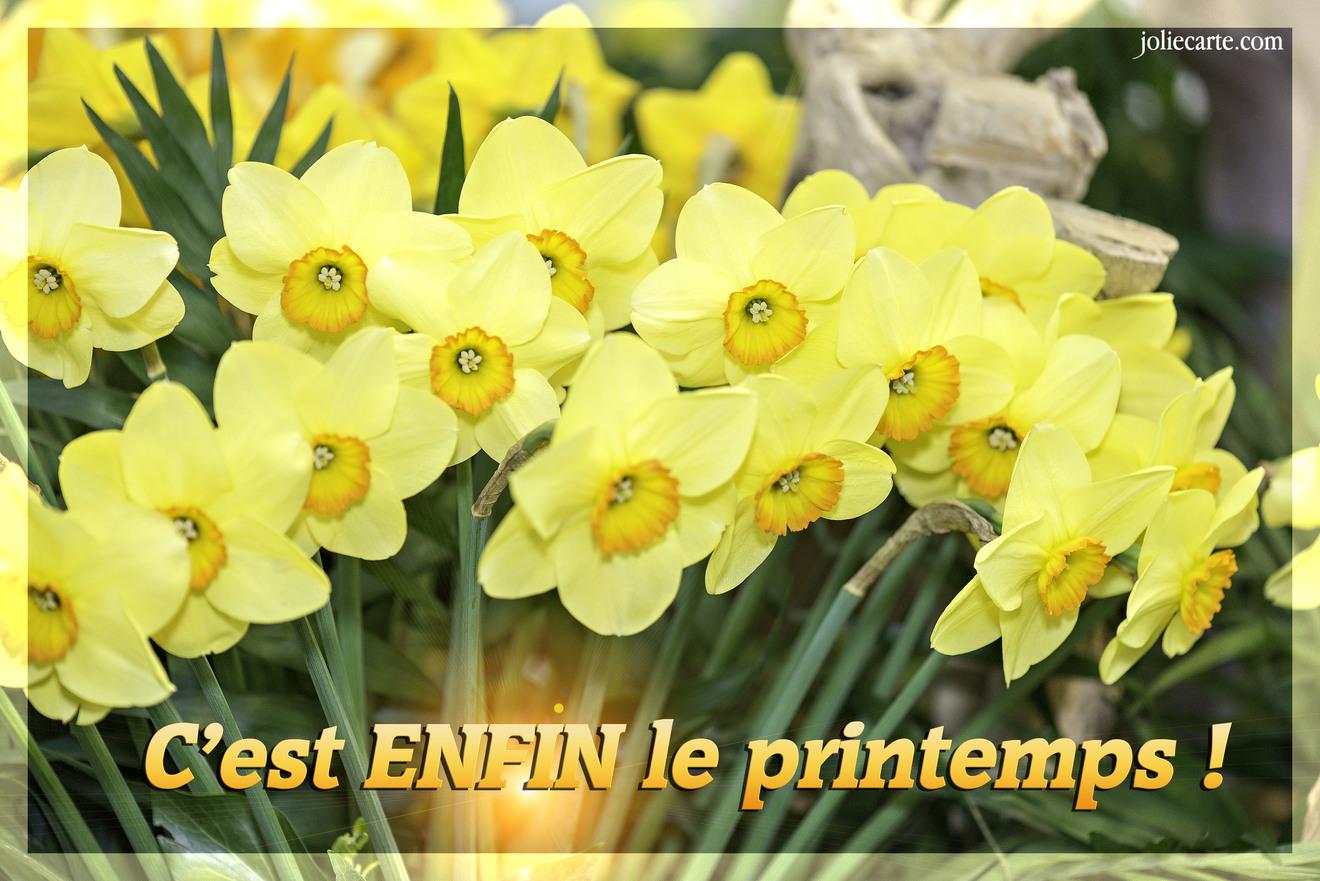 """Résultat de recherche d'images pour """"image printemps"""""""