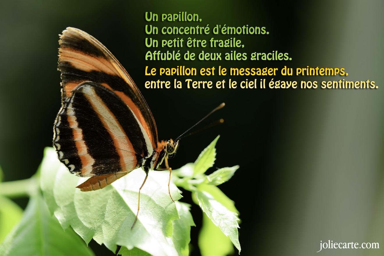 Un papillon, Un concentré d'émotions. Un petit être fragile, Affublé de deux ailes graciles. Le papillon est le messager du printemps, entre la Terre et le ciel il égaye nos sentiments.
