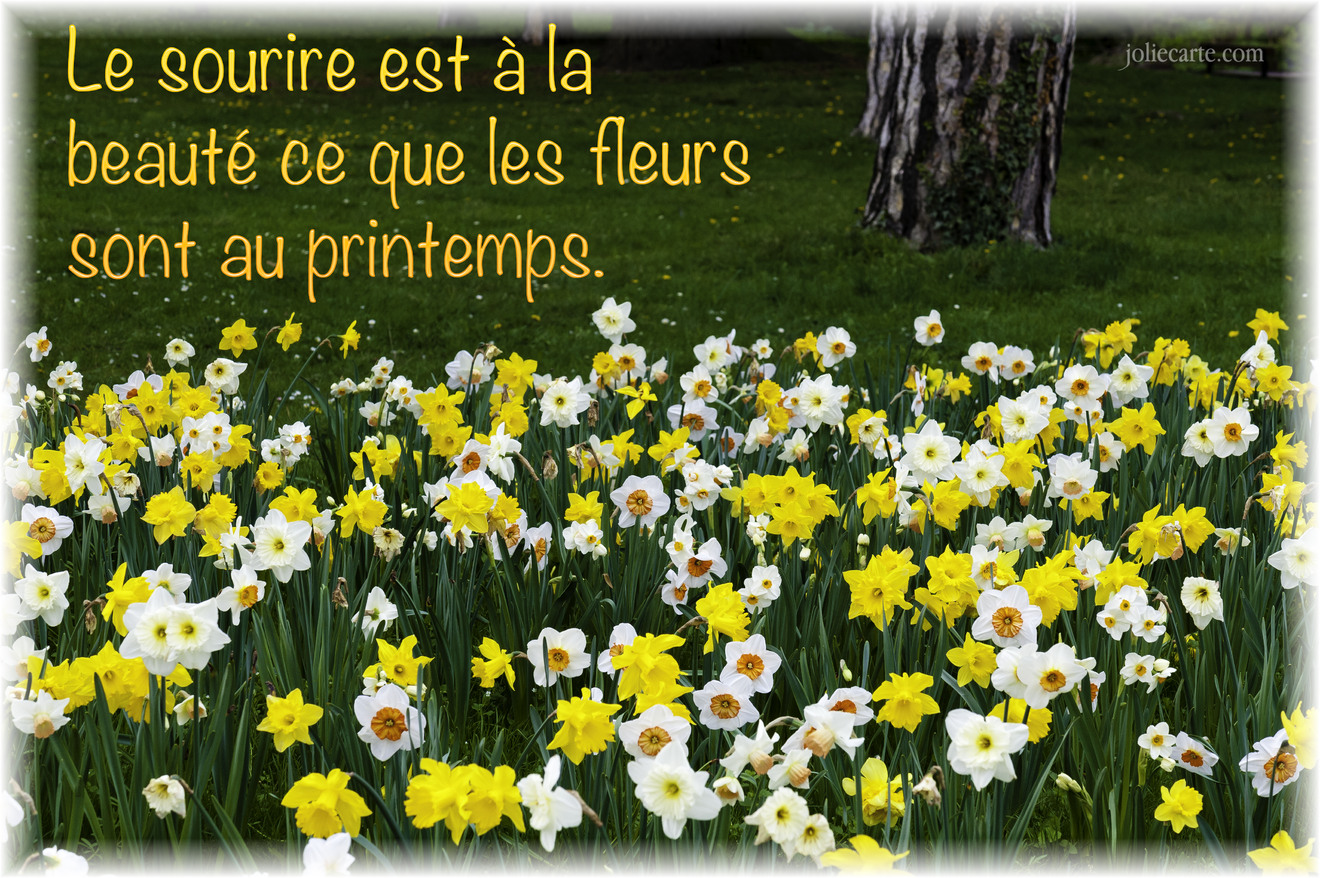 Printemps photo