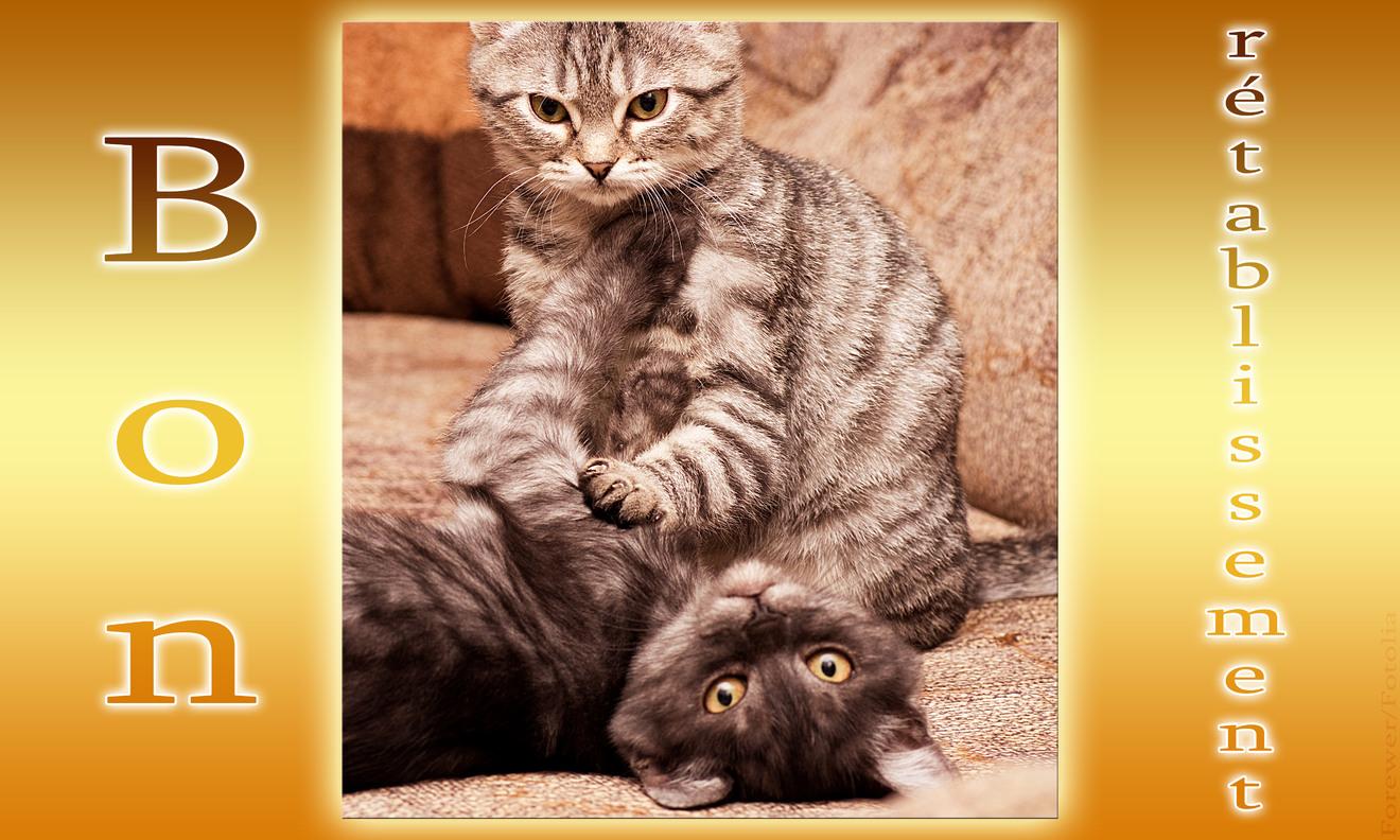 Cartes virtuelles bon retablissement chat joliecarte - Je te souhaite un bon retablissement ...