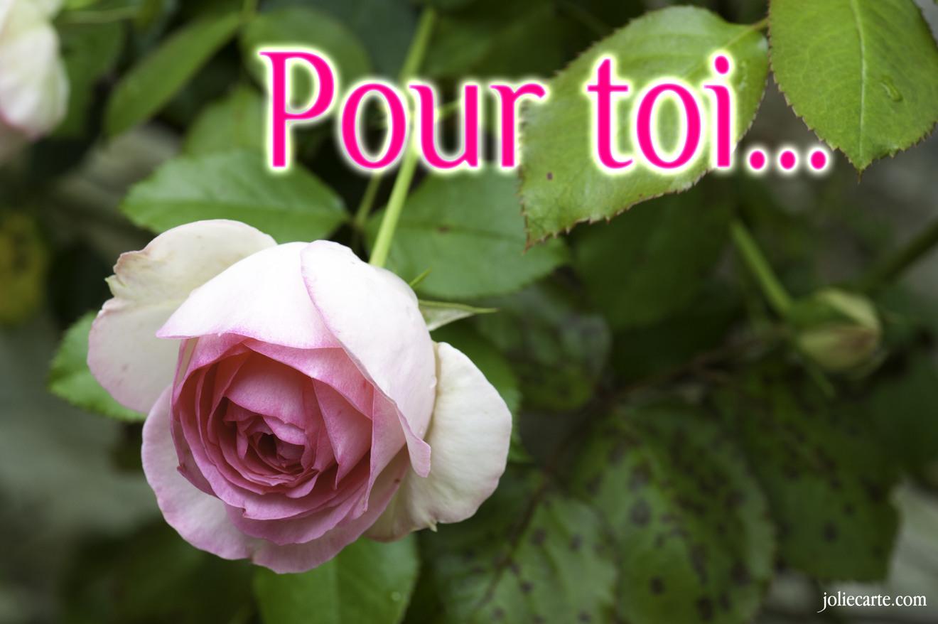 Cartes virtuelles pour toi joliecarte - Carte d amour ...