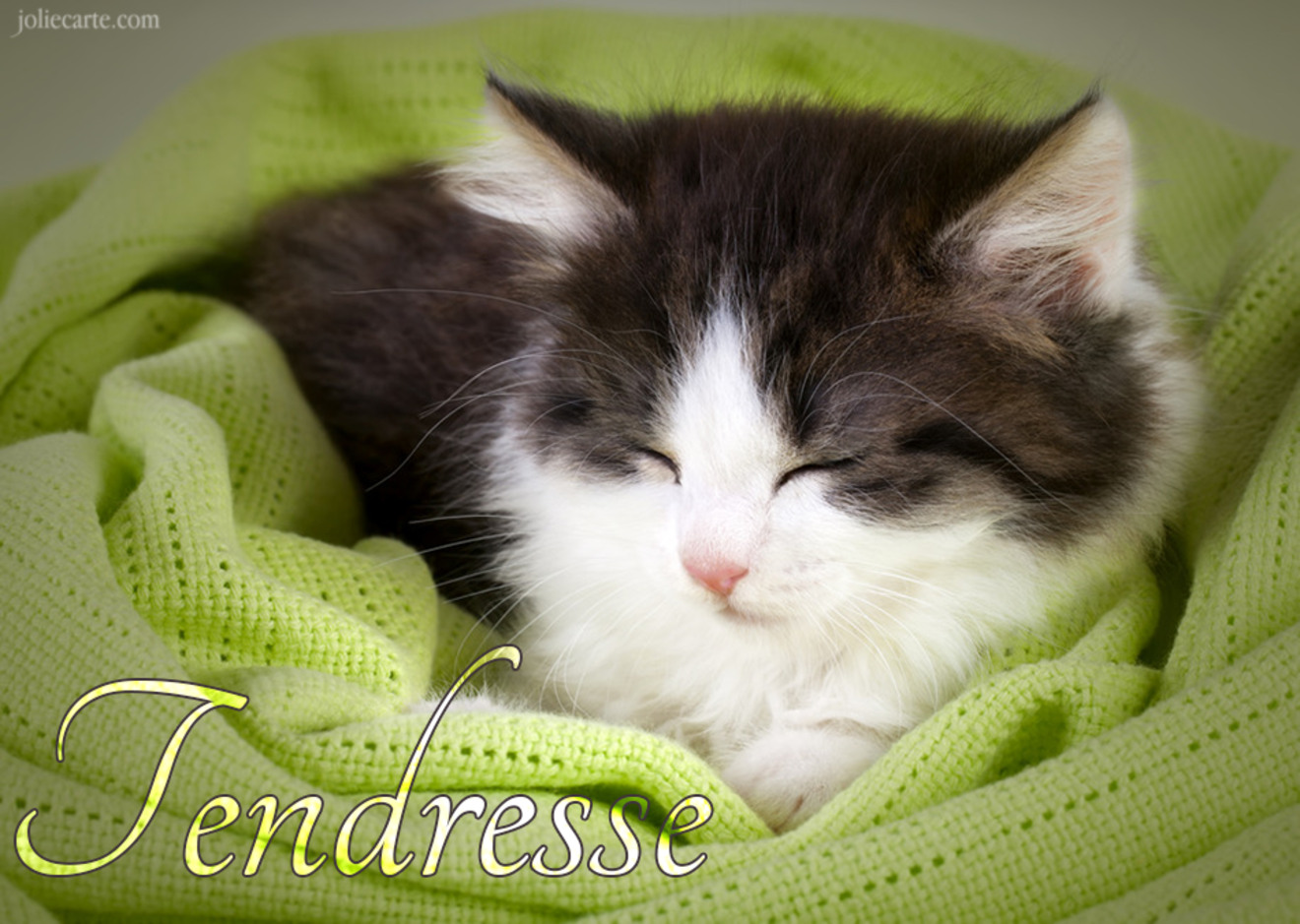 Tendresse chaton