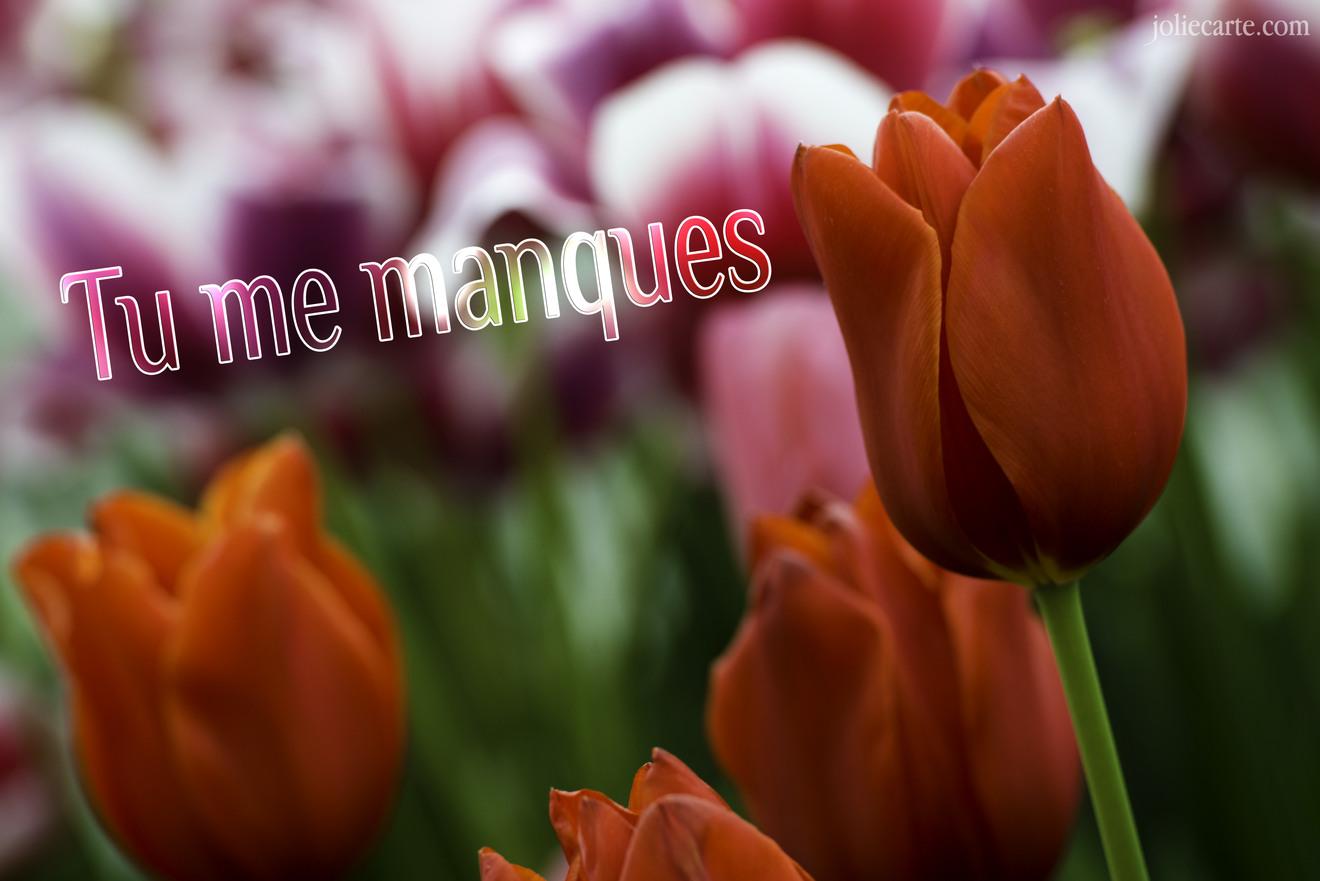 Tu manques tulipe