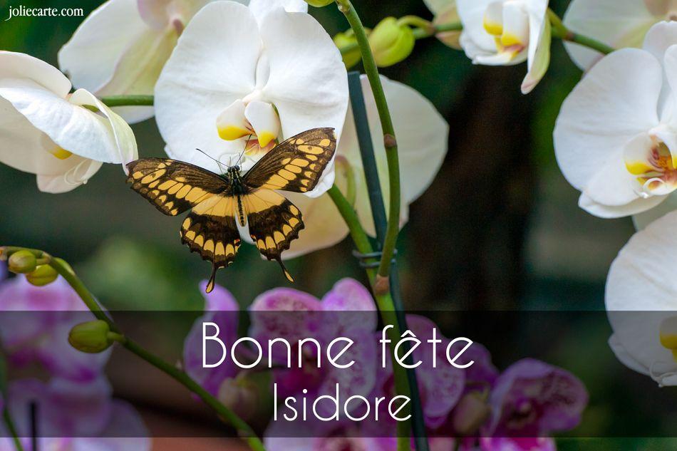 Cartes virtuelles bonne f te isidore - Prenom isidore ...